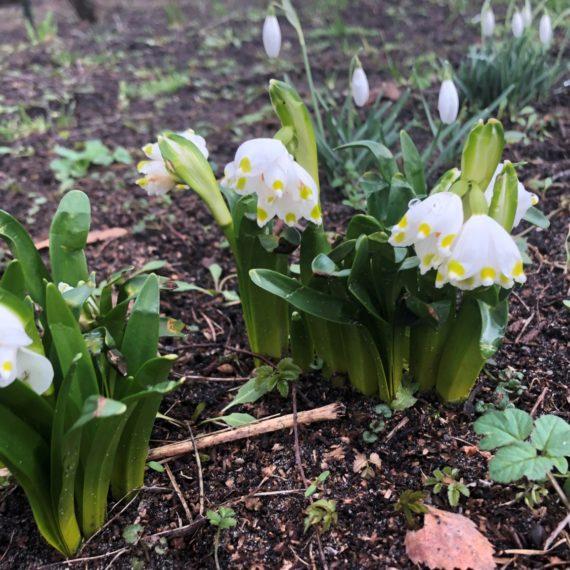 Оздоровительная Весна в Юрмале
